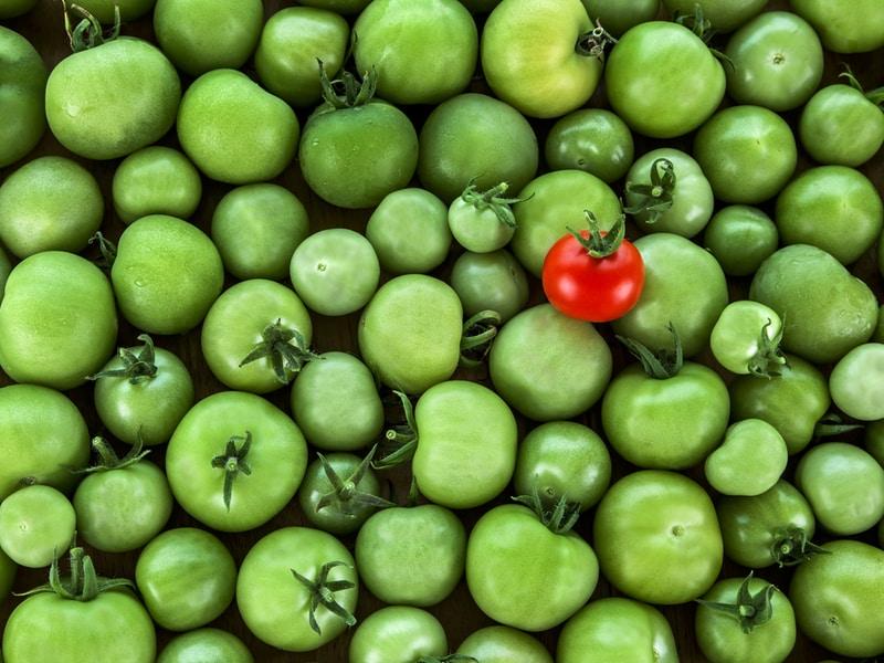 Rote Tomate hebt sich von grünen Tomaten ab