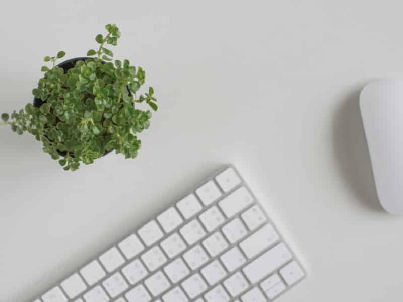 clavier blanc d'ordinateur design sur fond blanc avec une plante verte