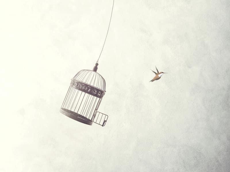 concept minimaliste d'un oiseau qui s'envole d'une cage pour illustrer le référencement